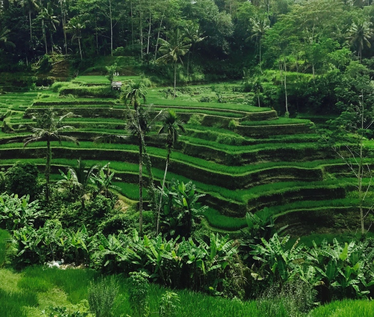 Bali-Tegalallang-Rice-Terraces.jpg