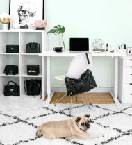 Becca Risa Luna Home Office Fashion Pug