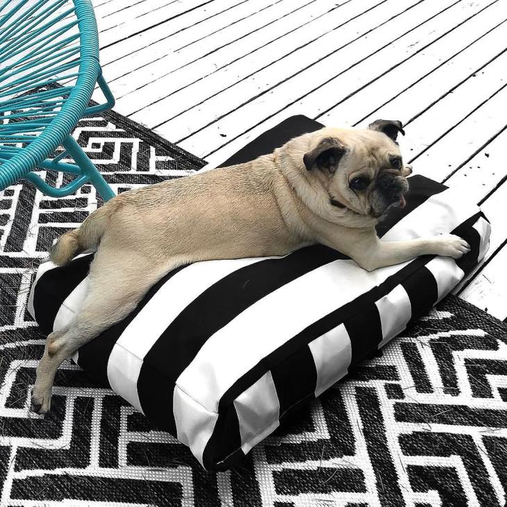 Pug sprawled out on black-and-white striped pillow